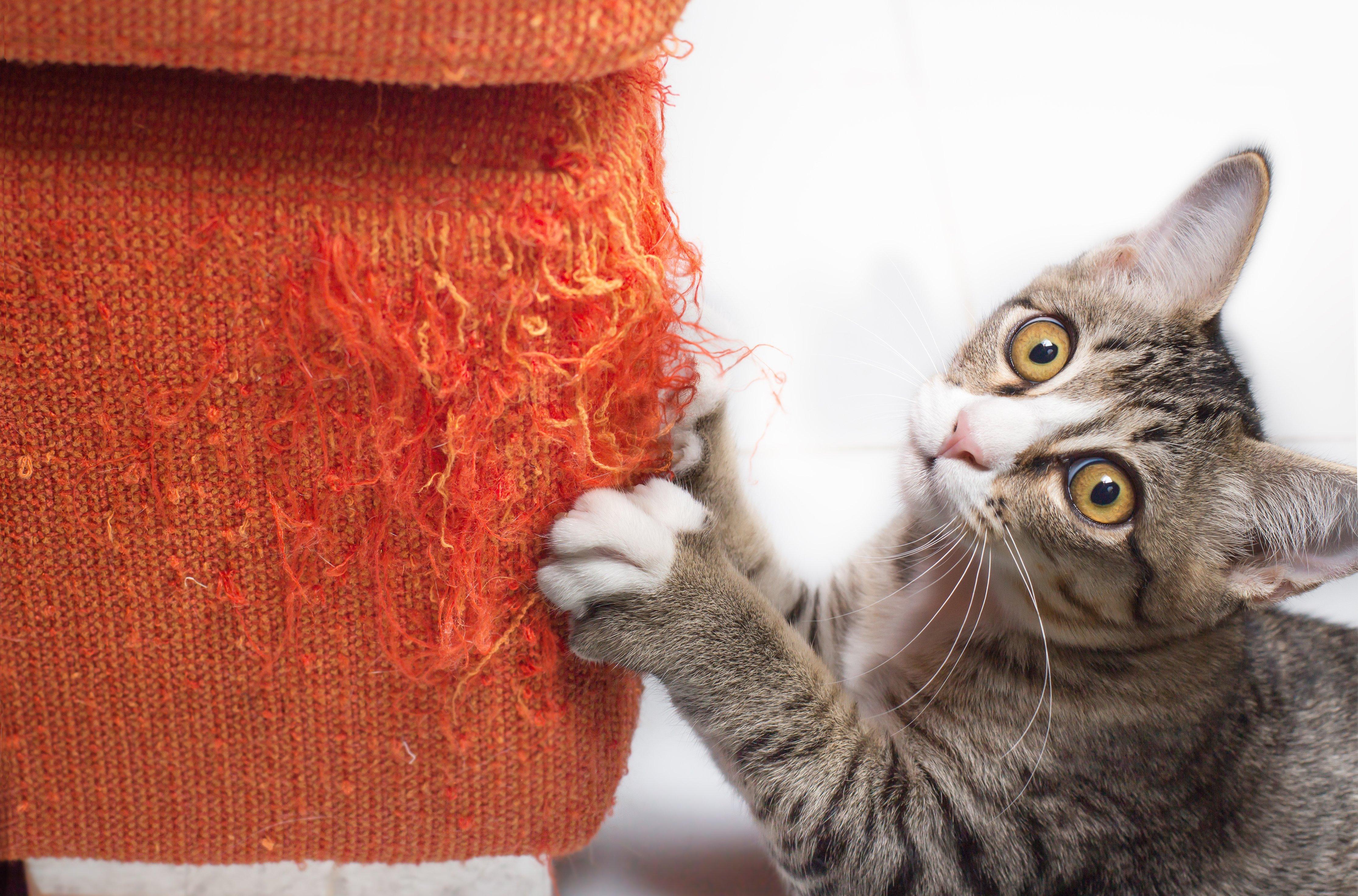 Czy można oduczyć kota niepożądanych zachowań?